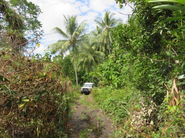 4wd-in-jungle
